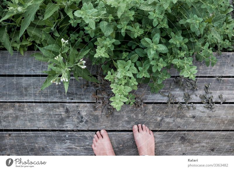 Two feet on wooden terrace with herbs and plants Feet Barefoot Summer Herbs and spices out Terrace Wood Exterior shot Toes Human being Grass Floor covering Balm