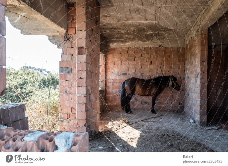 A neglected horse in a ruin looks apathetically at the wall Horse connected Keeping of animals dilapidated Ruin forsake sb./sth. exploited Animal Nature Farm
