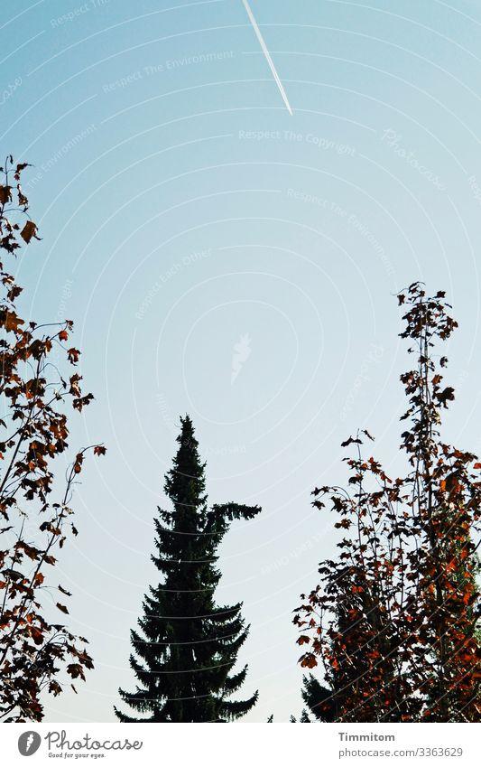 Tree, benevolent Plant Sky Cloudless sky Autumn Beautiful weather Spruce Deciduous tree Park Blue Brown Green Black White Surprise Vapor trail Colour photo