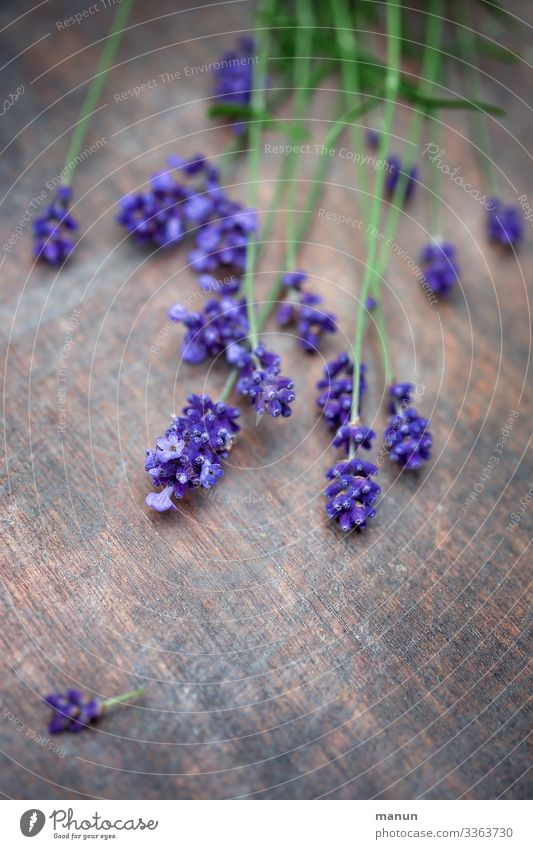 Lavender flowers on wooden table Plant Violet Medicinal plant Fragrance Summer bleed Nature Blossoming salubriously Colour photo