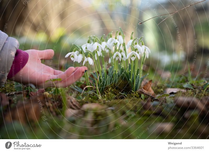 Spring is here Parenting Kindergarten Child Schoolchild 1 Human being Faded Humanity Solidarity Help Mother's Day Thank you very much Snowdrop Colour photo