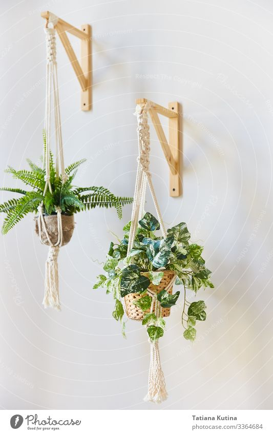 indoor flowers in flower pots hanging on a white wall. Pot Design Beautiful Harmonious House (Residential Structure) Garden Decoration Gardening Nature Plant