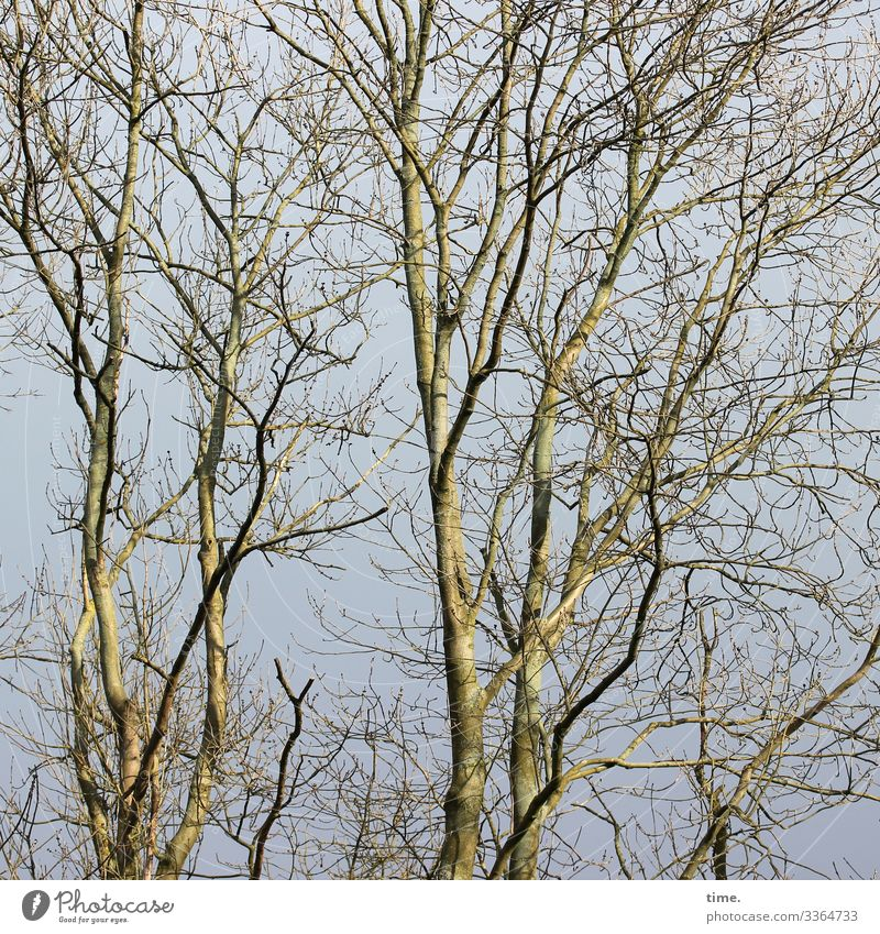 Interdependencies (4) Tree Wood Sky branches twigs disorientation Nature communication Tree trunk wax Network Integration structure Ethnic Tall nesting places
