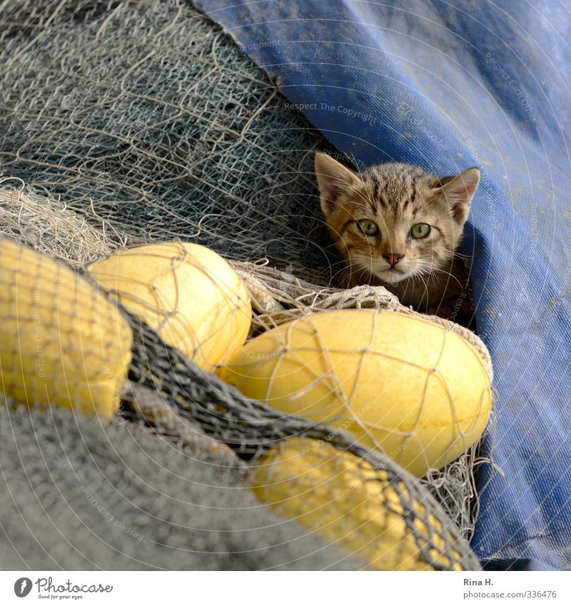 Fisherman's Friend Cat 1 Animal Observe Curiosity Cute Blue Yellow Fishing net plastic tarpaulin Hide Colour photo Exterior shot Deserted Copy Space right