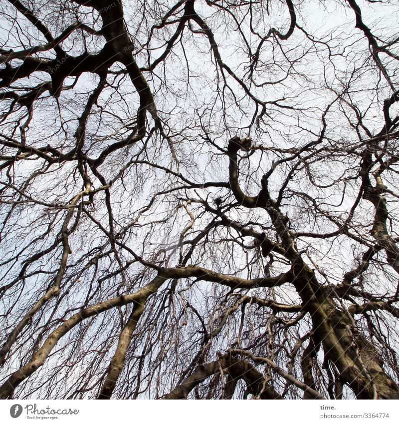 Interdependencies (1) Tree Wood Sky branches twigs havoc disorientation Nature communication Winter Tree trunk wax Old Network Integration structure Ethnic Tall