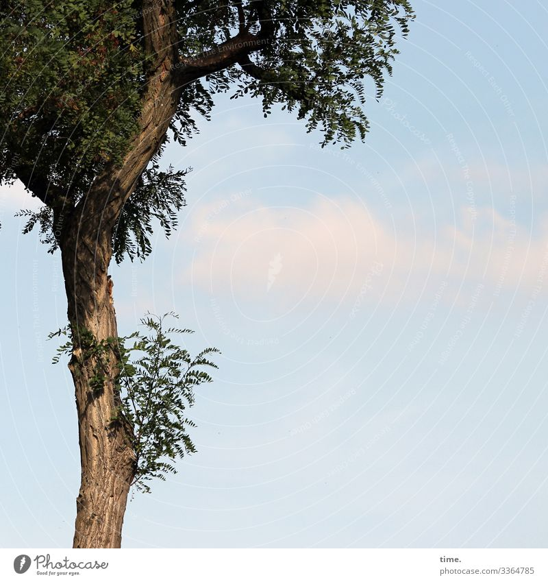 RENEWS Tree Wood Sky branches twigs Nature communication Tree trunk wax Network structure Ethnic Tall Sunlight leaves Leaf vegetation Season Shadow Clouds