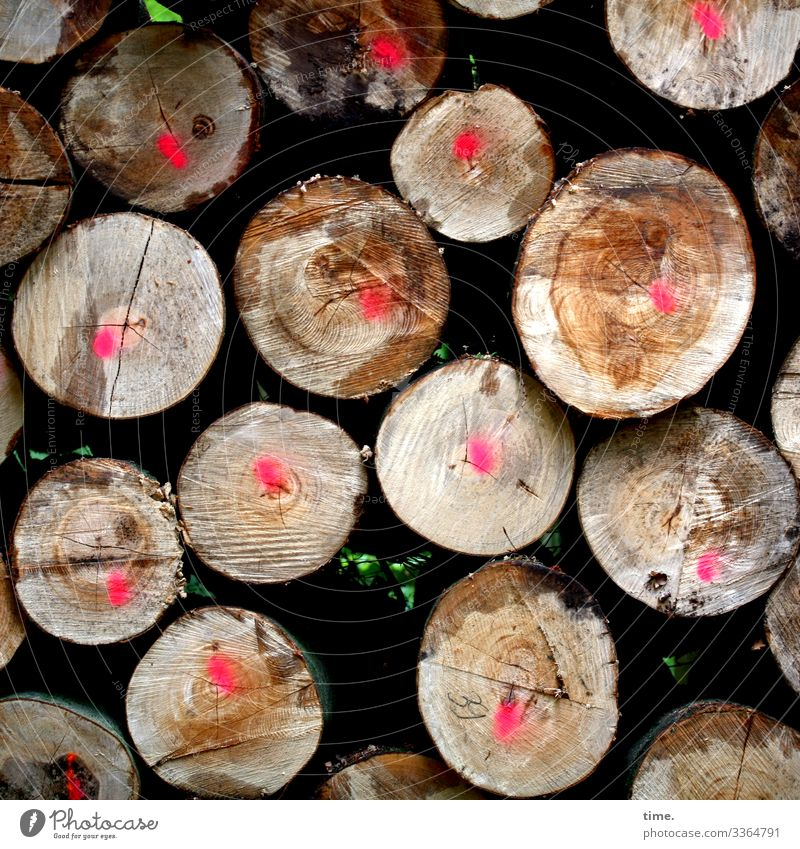Cut goods Wood sawn timber Tree Tree trunk Forest Lumberyard mark in common Lie stacked Full Nature Storage Forestry imposter staple goods ready for transport
