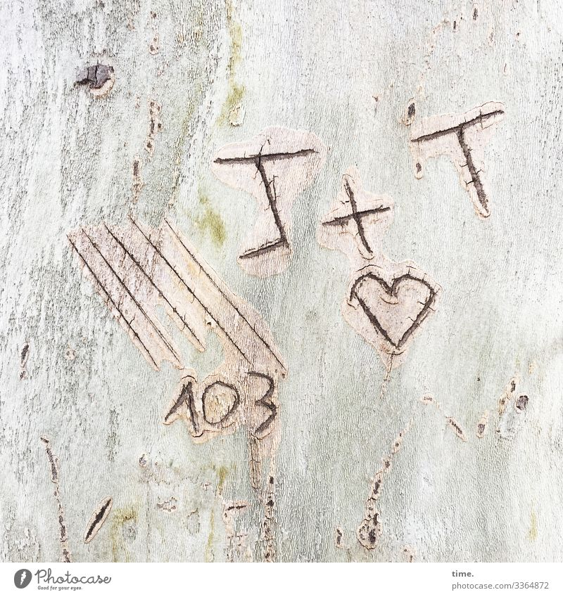 Secret code letter strokes Heart Tree bark Love daylight graffiti scratched 103 plus sign Plus addition In love Romance secret embassy Irritation Puzzle
