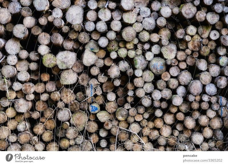there's the worm in it! wood Forest Stack of wood Supply Firewood Forestry Fuel Environment Energy Structures and shapes Tree trunk Log Logging