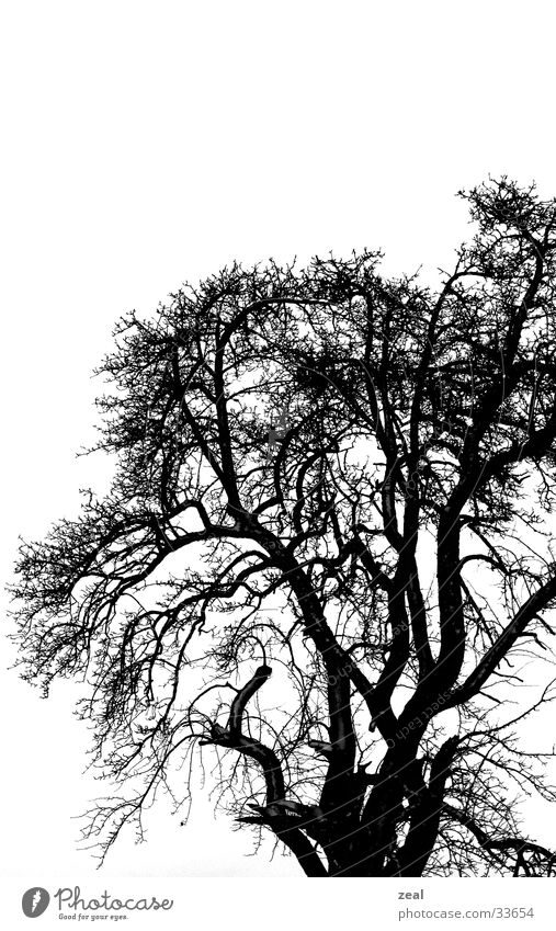 "<font color=""#ffff00"">-==- proudly presents Tree Winter Dreary Cold Gloomy Dark Branch Black & white photo"