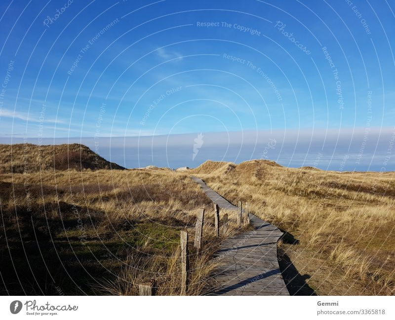 Planked path through dunes Dunes boards Promenade Grass Marram grass from Landscape Sky Island North Sea Schleswig-Holstein Winter Lonely melancholy