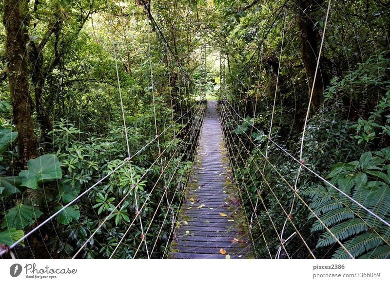 Bridge through Juan Castro Blanco National Park Vacation & Travel Far-off places Nature Adventure Tourist tree tropical vacations scenic Margin of a field