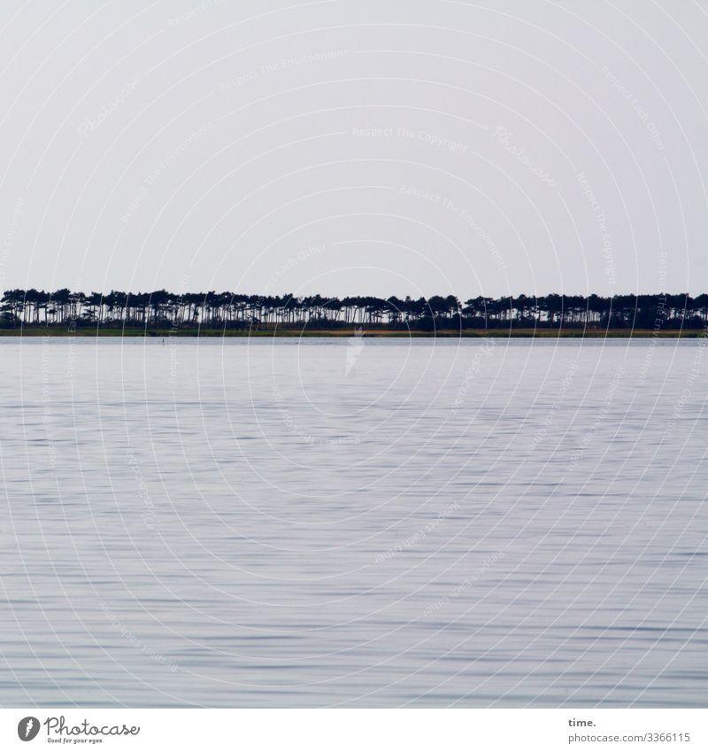 coastguard Environment Nature Landscape Water Sky Horizon Tree Row of trees coastal protection Pine Waves Coast Beach Baltic Sea Growth Maritime Wet Power