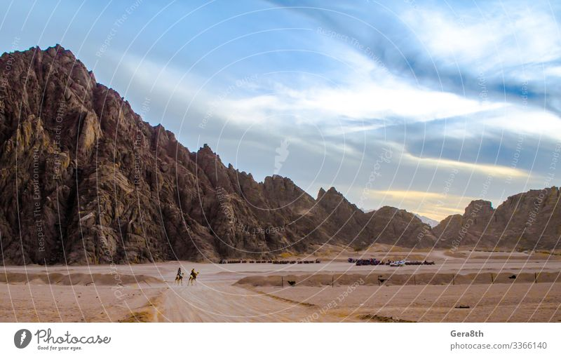 mountains in the desert Sharm El Sheikh Egypt Exotic Vacation & Travel Mountain Nature Landscape Sand Sky Clouds Horizon Rock Stone Walking animals Camel
