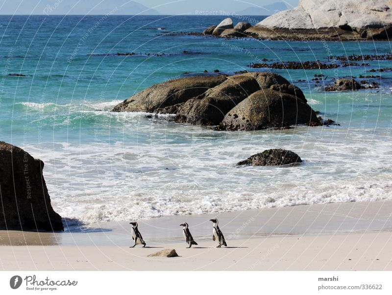 Family trip to the beach Nature Landscape Plant Animal Sun Summer Autumn Weather Beautiful weather Waves Coast Beach Ocean 3 Group of animals Going Penguin