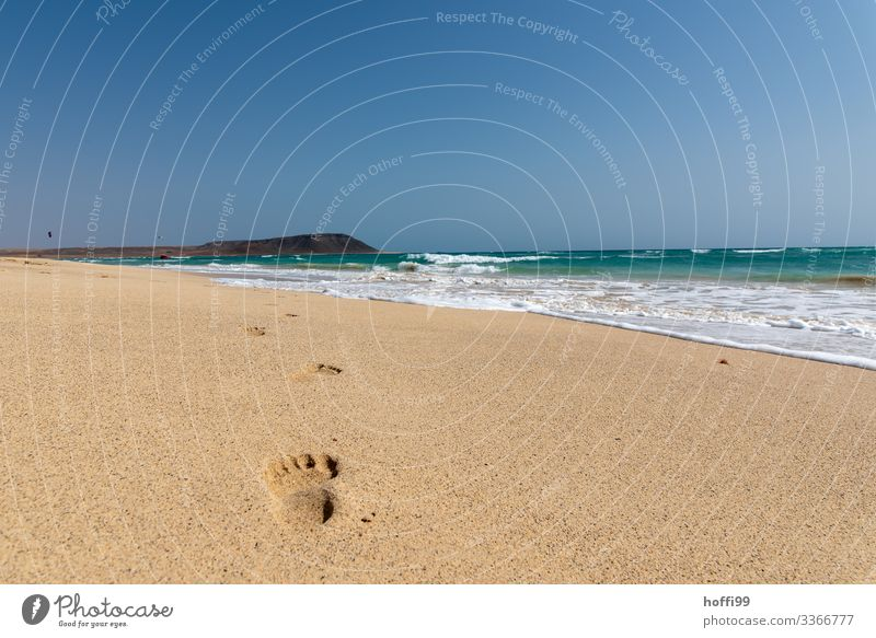search for clues Exotic Summer Summer vacation Sun Beach Ocean Island Waves Nature Landscape Beautiful weather Coast Desert Swimming & Bathing Movement