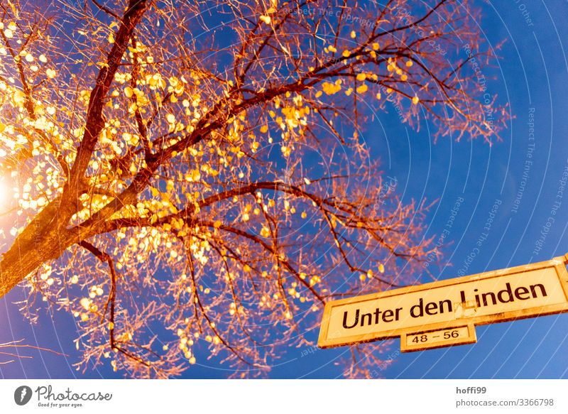 under the lime trees Nature Cloudless sky Night sky Tree Capital city Places Street Lanes & trails Street lighting Signs and labeling Esthetic Authentic