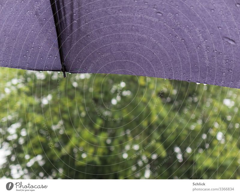 rainy weather Elements Climate Weather Bad weather Rain Tree Umbrella Wet Gray Green White Water Fluid Drops of water Textiles Protection Umbrellas & Shades