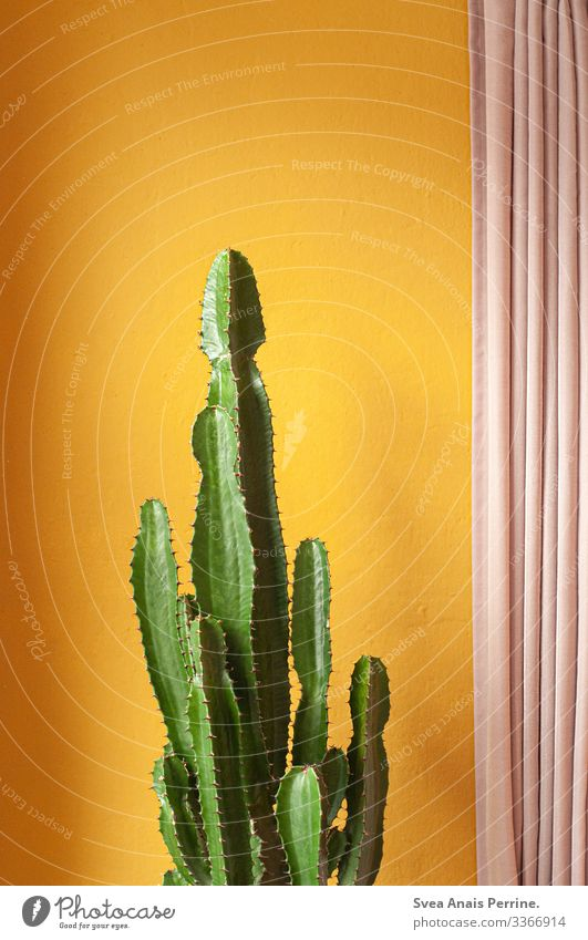 Wall colour collection - Yellow Style Design Plant Cactus Exotic Architecture Wall (barrier) Wall (building) Curtain Exceptional Hip & trendy Gold Pink Colour