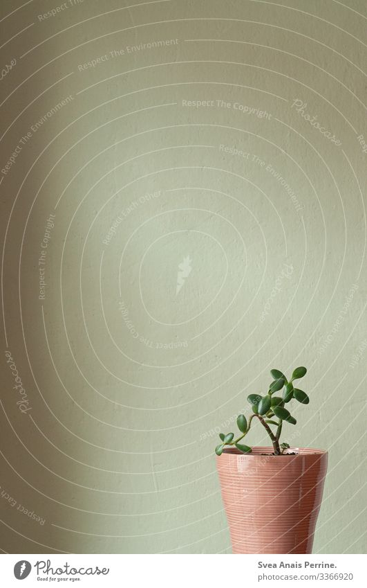 Wall colour collection - Light green Plant Flowerpot Wall (barrier) Wall (building) Modern Natural Green Pink Design Living or residing Interior shot