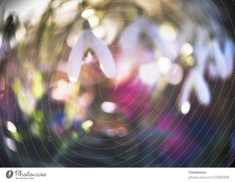 Photochallenge | snowdrops and rubber bands blurred White Green Environment Nature Plant Sky Wild plant Blossom Leaf Flower Spring Snowdrop Garden Park Meadow