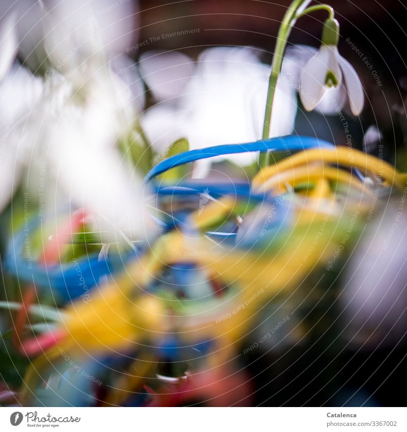 Photochallenge | rubber bands and snowdrops Winter Central perspective Copy Space bottom Shallow depth of field Day Close-up Macro (Extreme close-up) Deserted
