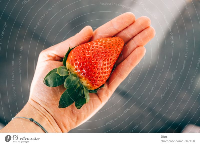 A man holding a large picked large strawberry in his hand in the sunlight by hand Delicious Retentive Strawberry Red Healthy Eating fruit Strawberry Time Gaudy
