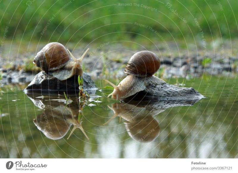 Snail Romance Environment Nature Landscape Plant Animal Elements Earth Sand Water Summer Beautiful weather Grass Garden Meadow Wild animal 2 Bright Near Wet