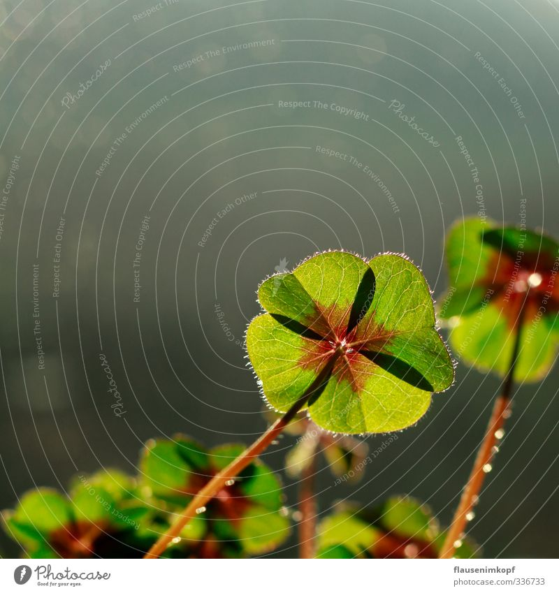 Plant Beautiful Green Summer Leaf Joy Life Emotions Spring Natural Happy Growth Success Esthetic Future Joie de vivre (Vitality)