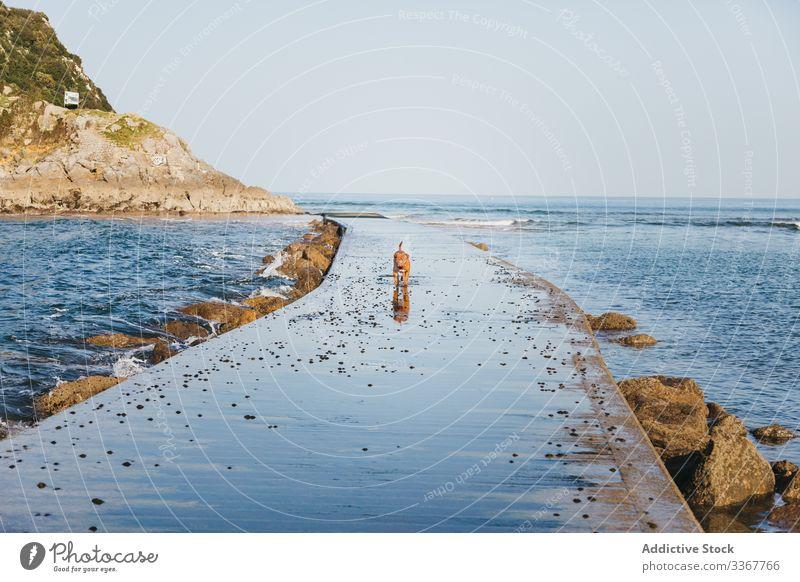 Dog running on stone pier sea nature dog coast wave water seaside pet walk spain lekeitio basque country gaztelugatxe canine animal beach ocean travel tourism