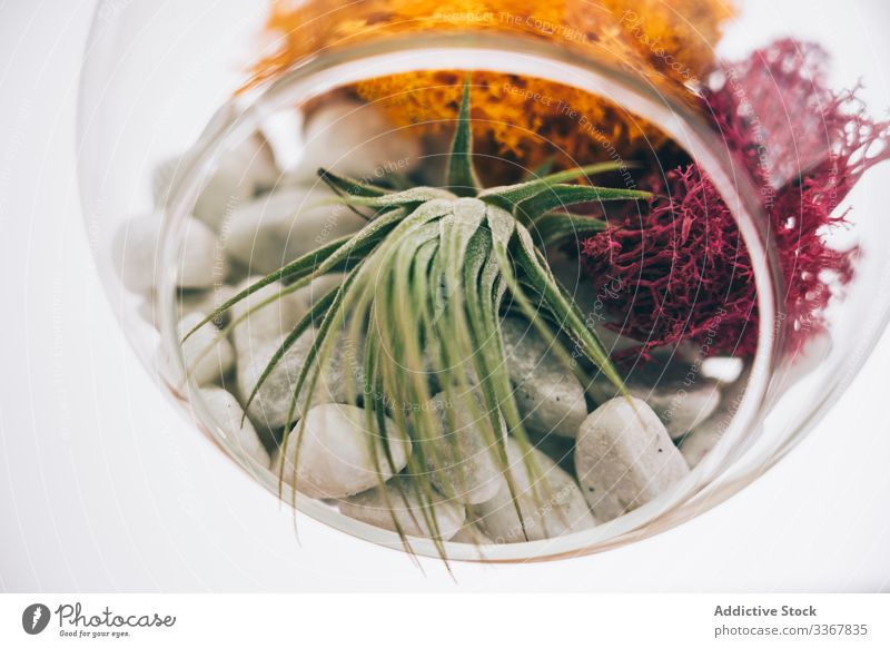 Decorative plants in glass plant terrarium decorative spherical succulent colorful hang transparent flower organic composition flora green botany creative