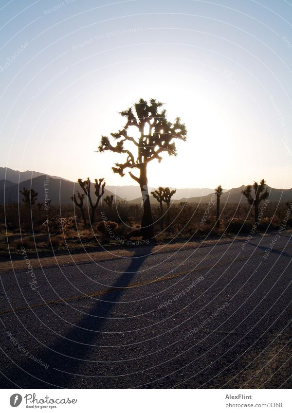 road 66 Tree Street Route 66 Country road Desert Back-light Sunlight Bright background Deserted