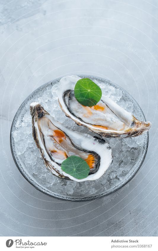 Oysters on a bowl with ice cubes oysters eat restaurant table clam seafood exquisite delicious tasty yummy palatable delectable savory dish meal luxury