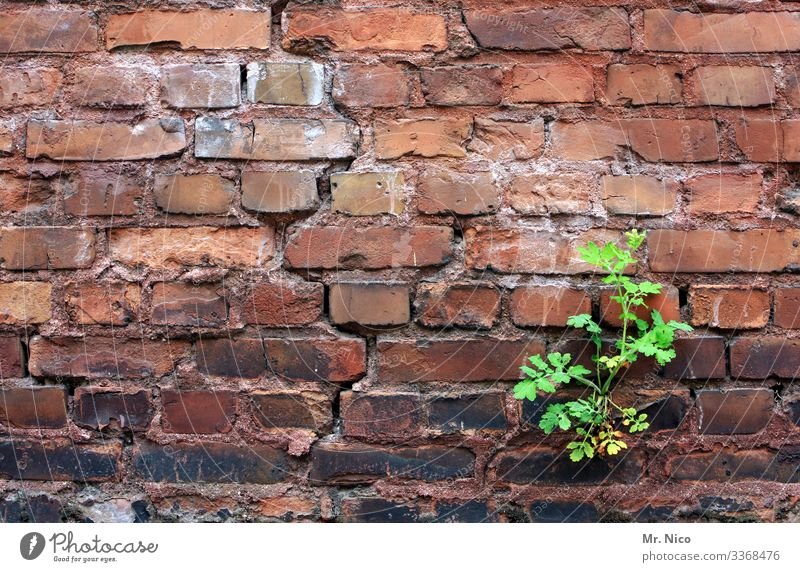 A matter of time Plant Leaf Village Town House (Residential Structure) Manmade structures Building Wall (barrier) Wall (building) Green Red Growth Assertiveness