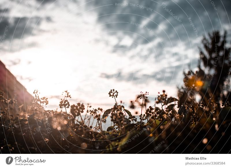 Autumnal flower bed against the light Environment Sky Clouds Beautiful weather Plant bushes Brown Sunlight Reflection Flare Sunbeam Colour photo Multicoloured