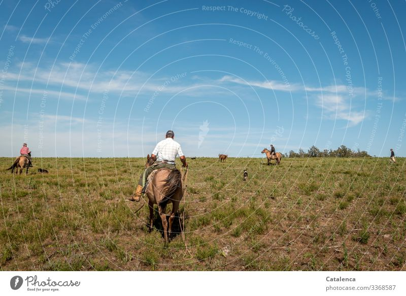 Four gauchos and three dogs against a cow at the lasso Rider Gauchos horses Lasso Cattle Meadow Willow tree Grass Sky Summer Horizon Landscape Nature