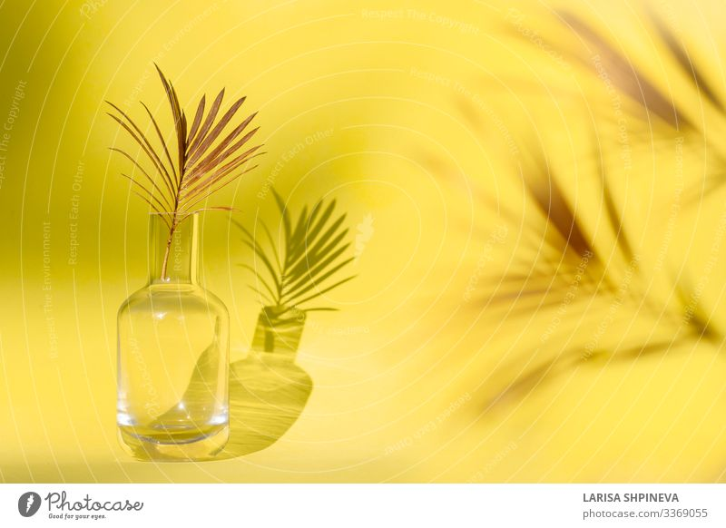 Golden palm leaf in glass vase on yellow background. Elegant Style Design Exotic Beautiful Summer Decoration Table Wallpaper Nature Plant Tree Flower Leaf