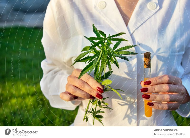 doctor holding branch cannabis, test tube Herbs and spices Medication Relaxation Science & Research Laboratory Examinations and Tests Doctor Hand Nature Plant