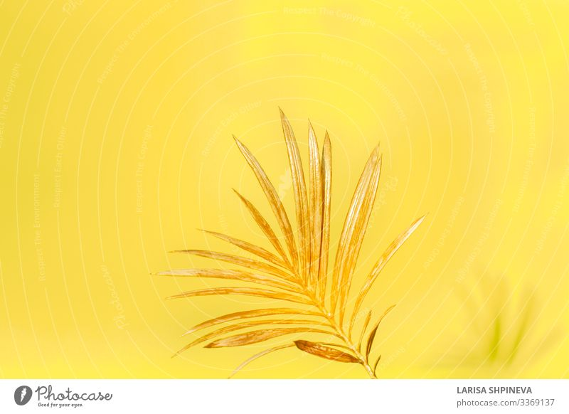 Golden palm leaf on yellow background. Elegant Style Design Exotic Beautiful Summer Decoration Wallpaper Office Nature Plant Tree Flower Leaf Virgin forest