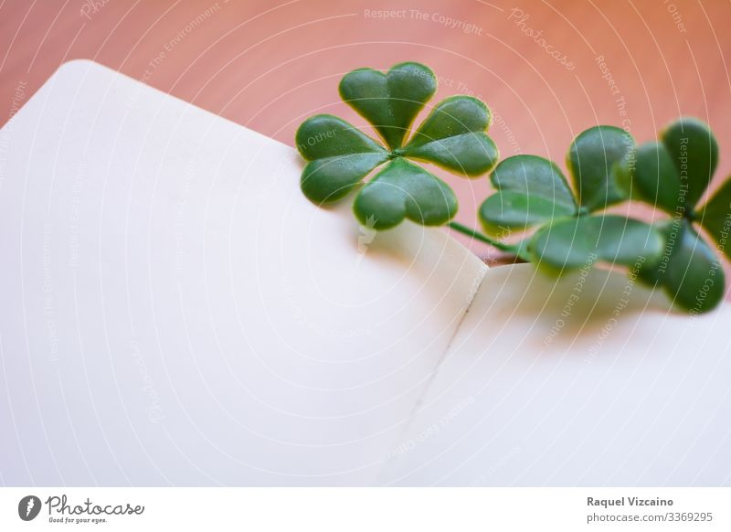 Clovers on blank notebook. Nature Plant clovers Paper Write Green White shamrock isolated luck patrick Irishman Ireland four lucky st holiday