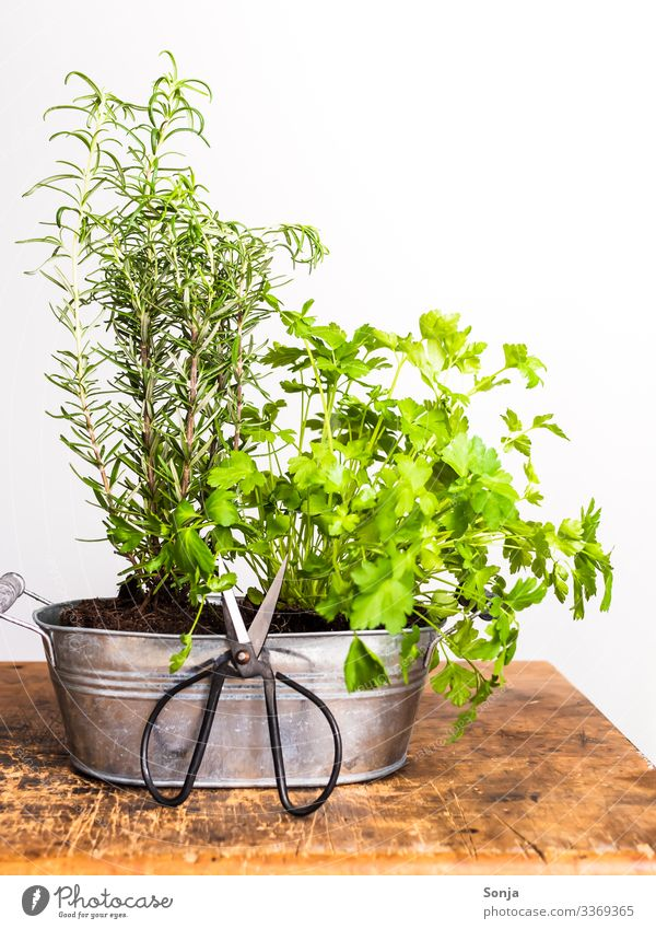 Fresh herbs in a pot Food Herbs and spices Rosemary Parsley Organic produce Scissors Fragrance Healthy Growth Herb garden Harvest Gardening Rustic Wooden table