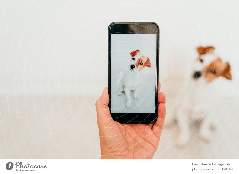 unrecognizable woman taking a picture with mobile phone of cute jack russell dog at home. Technology and pets concept hand screen device technology indoors