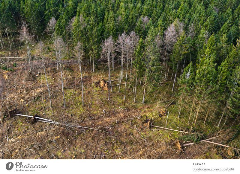 #Coniferous forest with storm damage 2 Winter Environment Nature Landscape Forest Esthetic Storm damage Hurricane Hurricane Cyril Colour photo Exterior shot