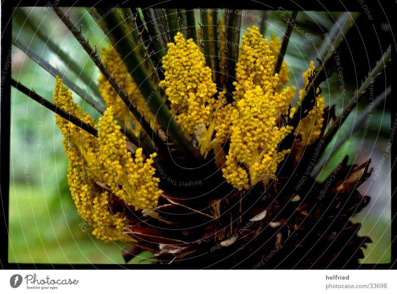 Nature Blossom Spring Garden Park Agave