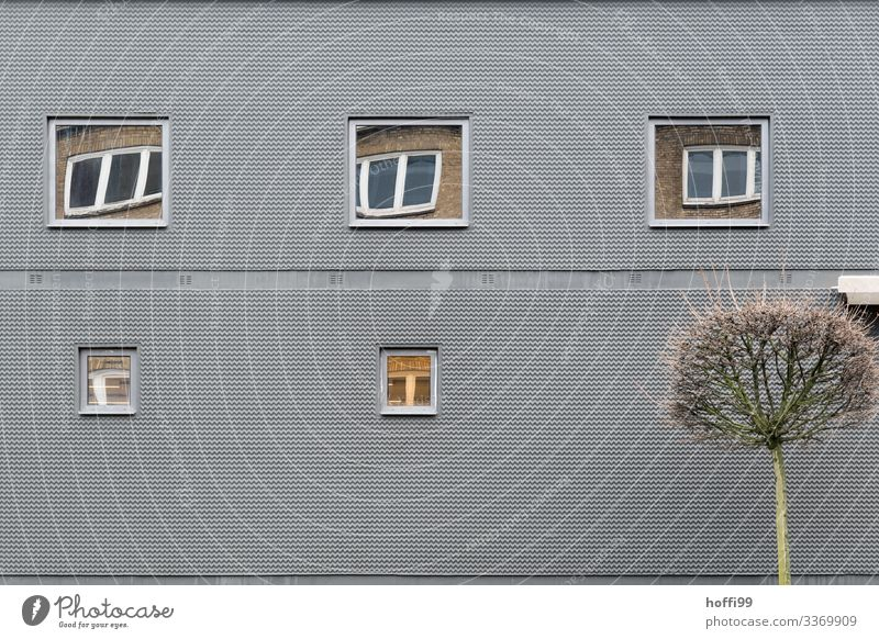 grey facade with windows reflecting in windows Bad weather Tree Building Architecture Wall (barrier) Wall (building) Facade Window Exceptional Dark Exotic Funny