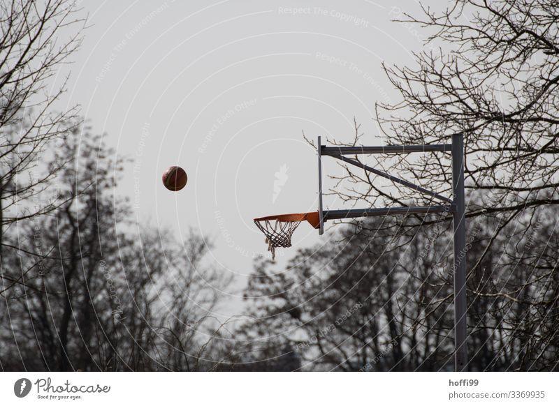 Ball & Basket Ball sports Basketball Sporting Complex Nature Sky Autumn Winter Bad weather Fog Rain Tree Park Basketball basket Touch Movement Throw Esthetic