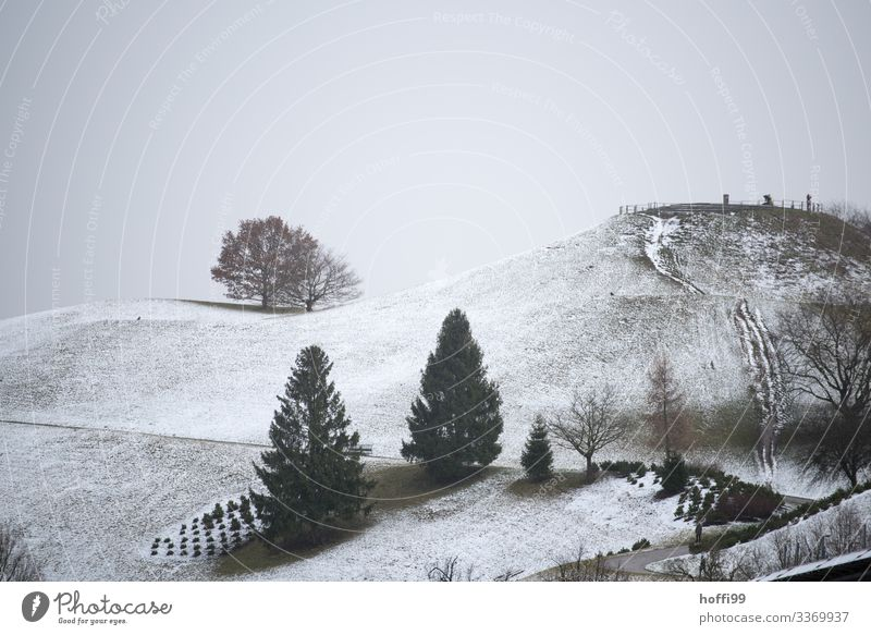 winterly hilly park landscape with trees in exposed position Landscape Clouds Winter Weather Bad weather Fog Snow Tree Park Hill Esthetic Dark Cold Wet Natural