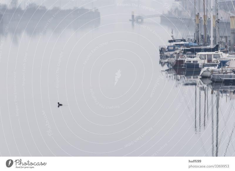 all is quiet Sailing Nature Water Autumn Winter Bad weather Fog Coast River bank Bay Harbour Harbour entrance Footbridge Jetty Navigation Sport boats Sailboat