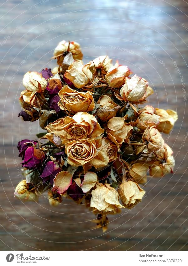 Bouquet of white and red roses dried Handicraft Flat (apartment) Interior design Decoration bouquet of roses Work of art Esthetic Elegant Dry Yellow Gold Red