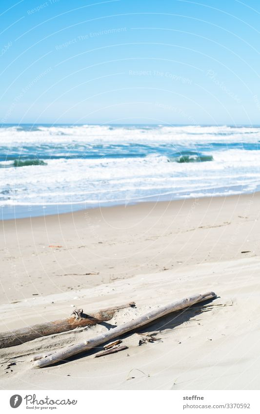 Seashore with tree trunk in the foreground Nature Landscape Beautiful weather Wild Sand Ocean Vacation & Travel Rough Oregon Colour photo Subdued colour